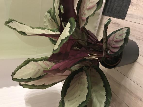 kann mir jemand sagen wie diese pflanze mit weiss gr n. Black Bedroom Furniture Sets. Home Design Ideas
