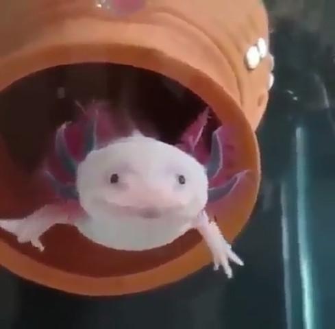 Kann mir jemand sagen wie dieses coole Tier heißt?