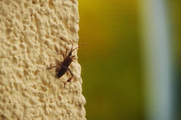 Insekt auf der Hauswand - (Natur, Insekten, Jahreszeiten)