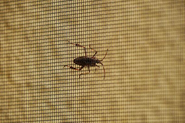 Insekt auf Fliegengitter - (Natur, Insekten, Jahreszeiten)