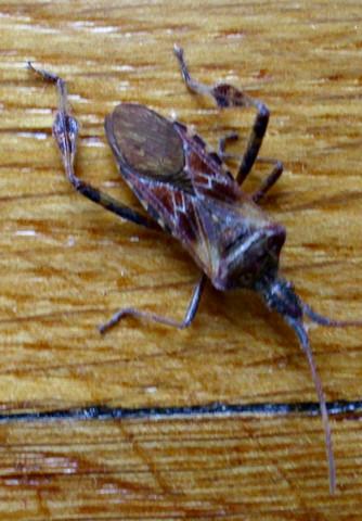 Der Käfer - (Insekten, Kaefer, Schädlinge)