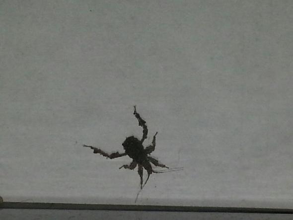 hier - (Tiere, Insekten, Käfer)