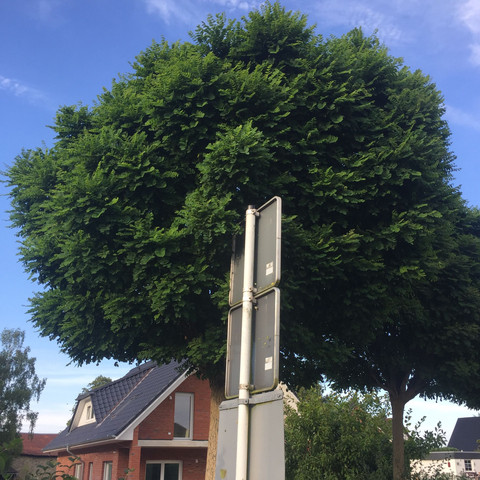 Baum 2 - (Tiere, Natur, Baum)