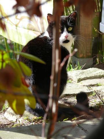 Flak - (Tiere, Katzen)