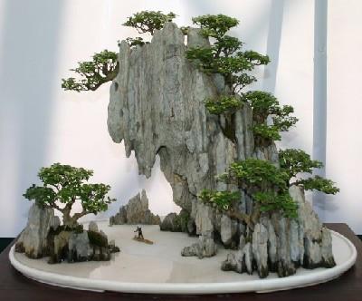 Etwas speziell, aber von der Steinstruktur schon meine Vorstellung - (Pflanzen, Natur, suche )