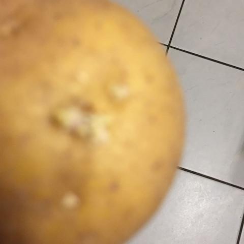 Gelbe Wurzeln schlimm ? - (Haltbarkeit, Wurzel, Kartoffeln)