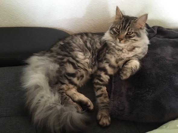Filou - (Katze, Kater)
