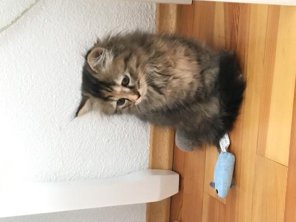Holly - (Katze, Kater)