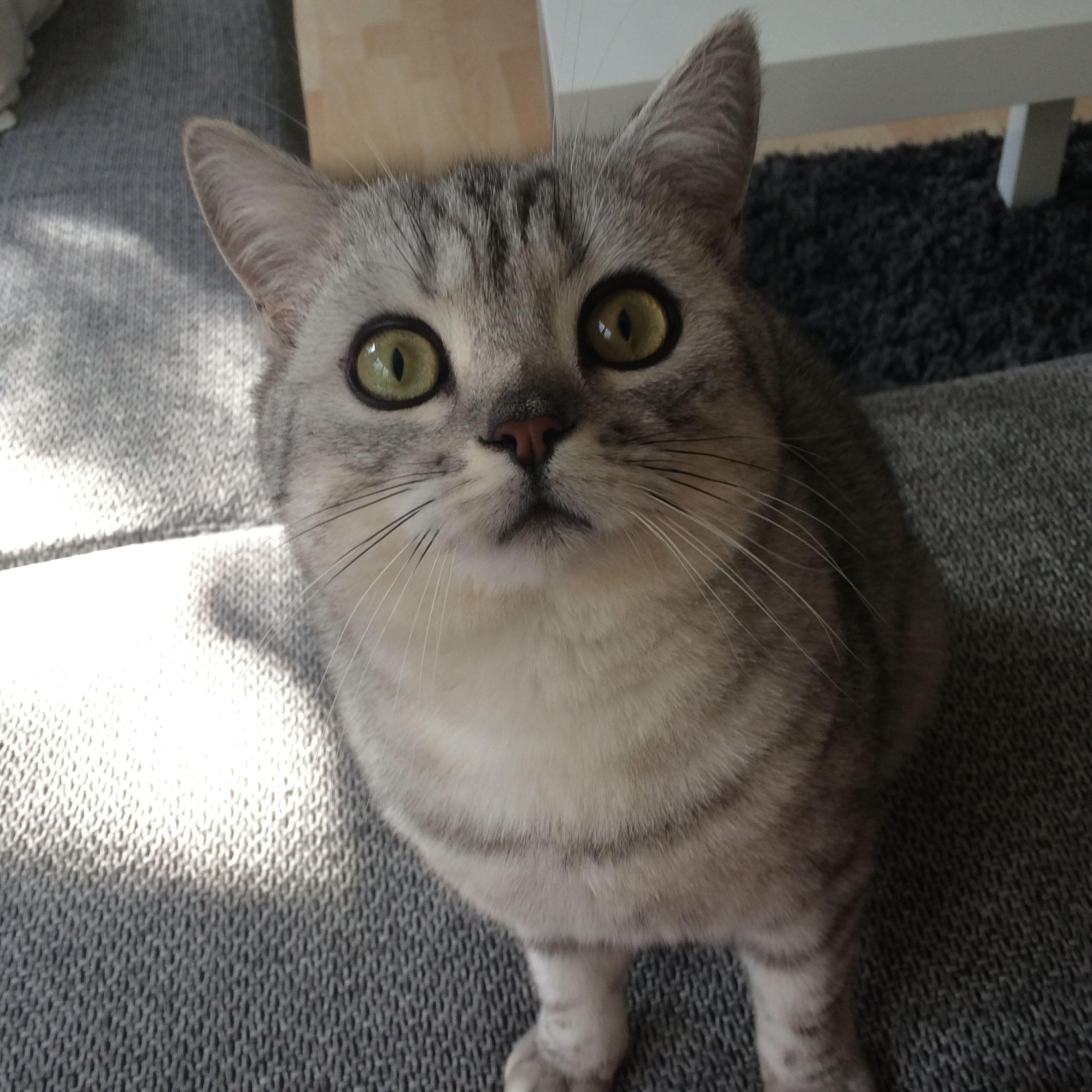 Neue Katze Miaut Ständig