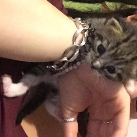 Das is die andere katze/kater für meine Schwester  - (Tiere, Katze, Namen)