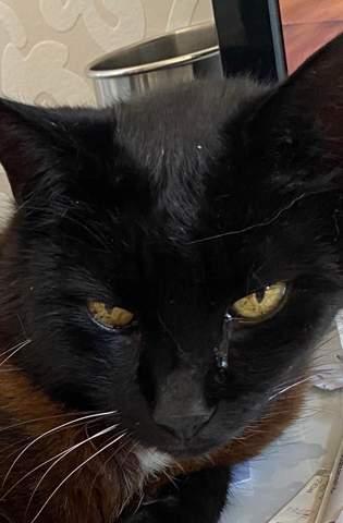 Katze Auge tränt ständig?