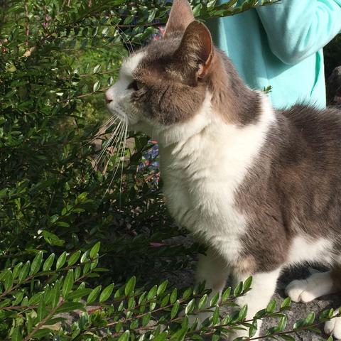 Katze - (Katze, Katzen, augesetzt)