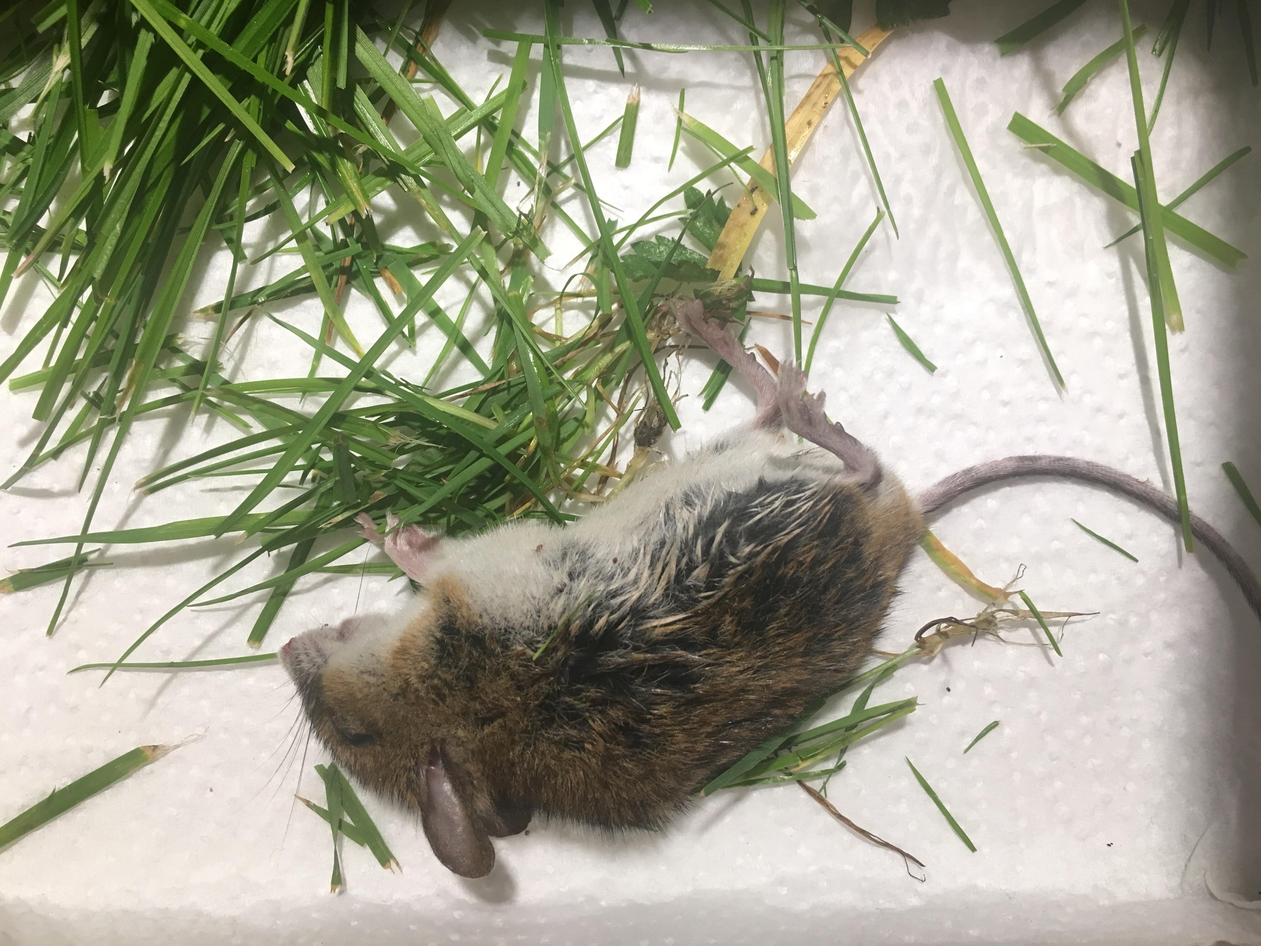 Katze Bringt Maus Wieso Springt Sie Beim Aussetzen Nicht Weg