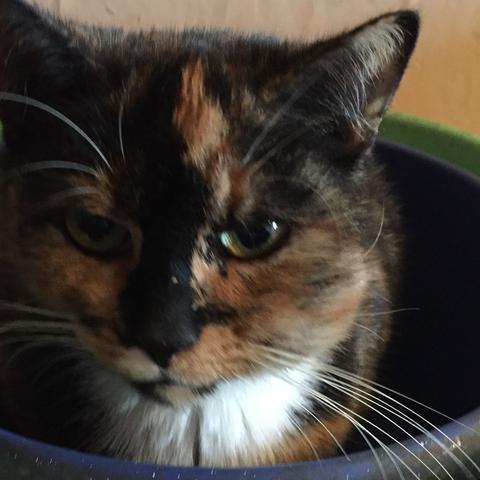Katzie  - (Tiere, Katze, Katzen)