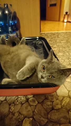 Katze einen Klaps auf den Po geben, findet ihr das ok