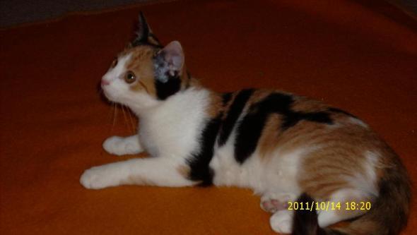 Katze Jenna - (Urlaub, Katze)