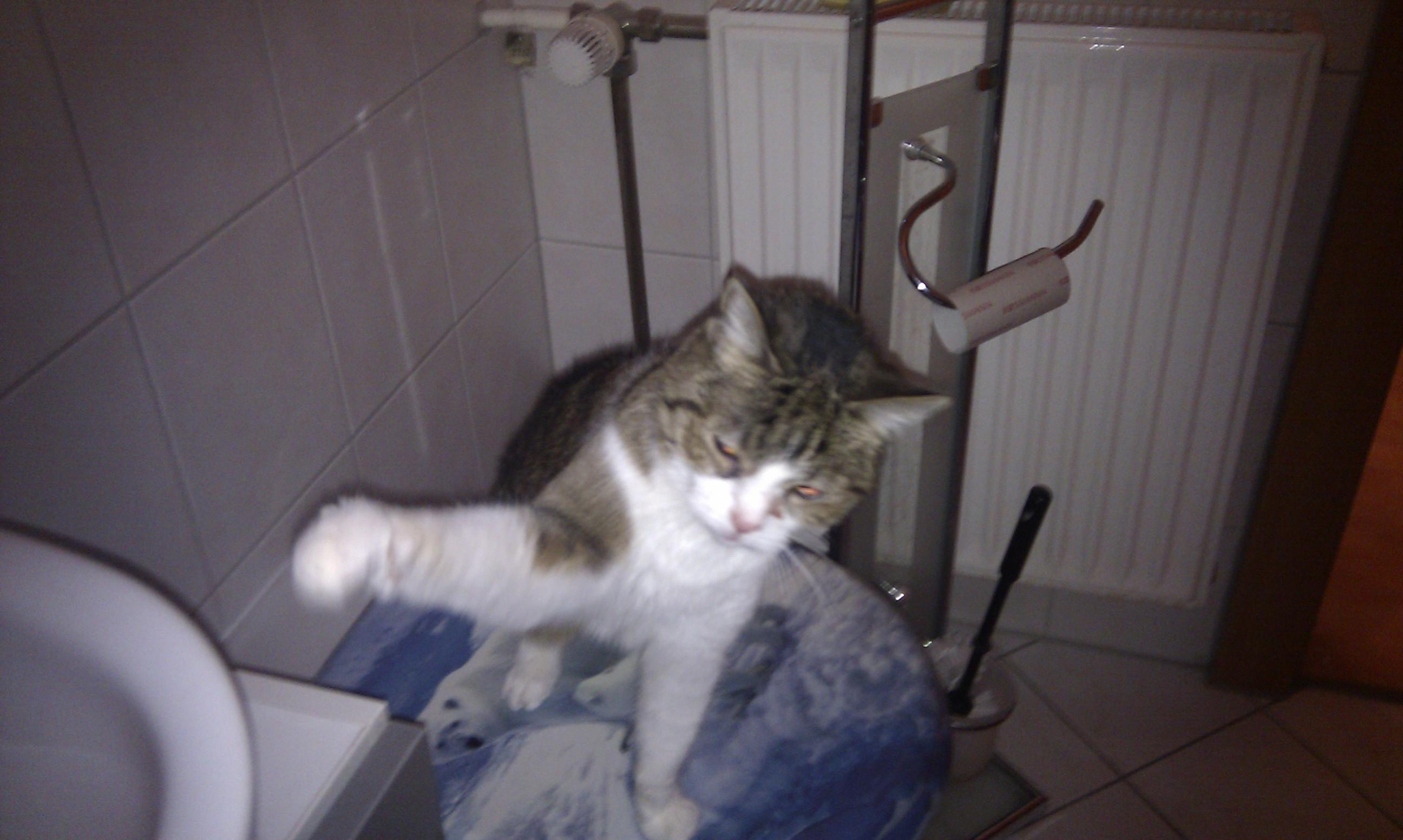 Katze frisst nicht, Trinkt aber viel (krank, Katzen)