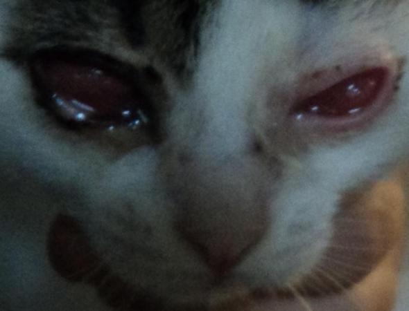 Katze gefunden mit schlimmen Augen. - (Katze, Katzenauge)