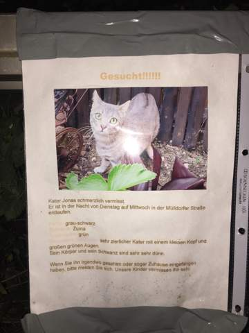 Katze gefunden, Besitzer?