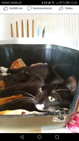 - (Katze, Haustiere, Katzen)