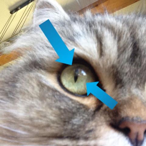 Katze kneift ein auge zu