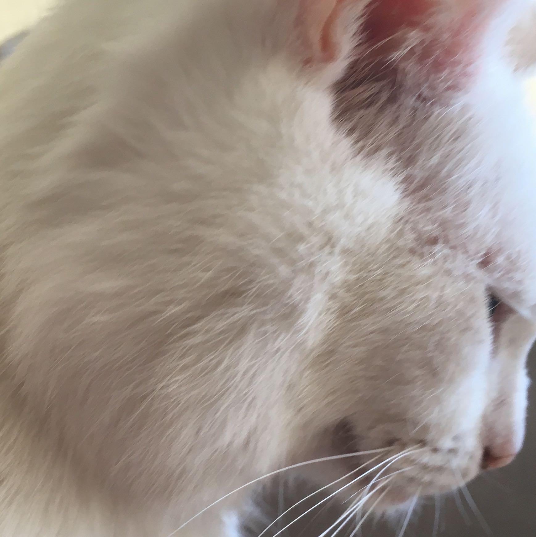 Katze Tumor Bauch