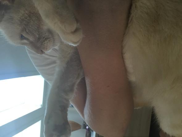 - (Katze, Katze Haare)