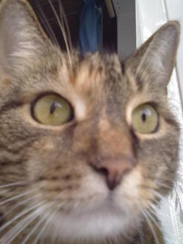 Meine Miez - (Katzen, Tierarzt)