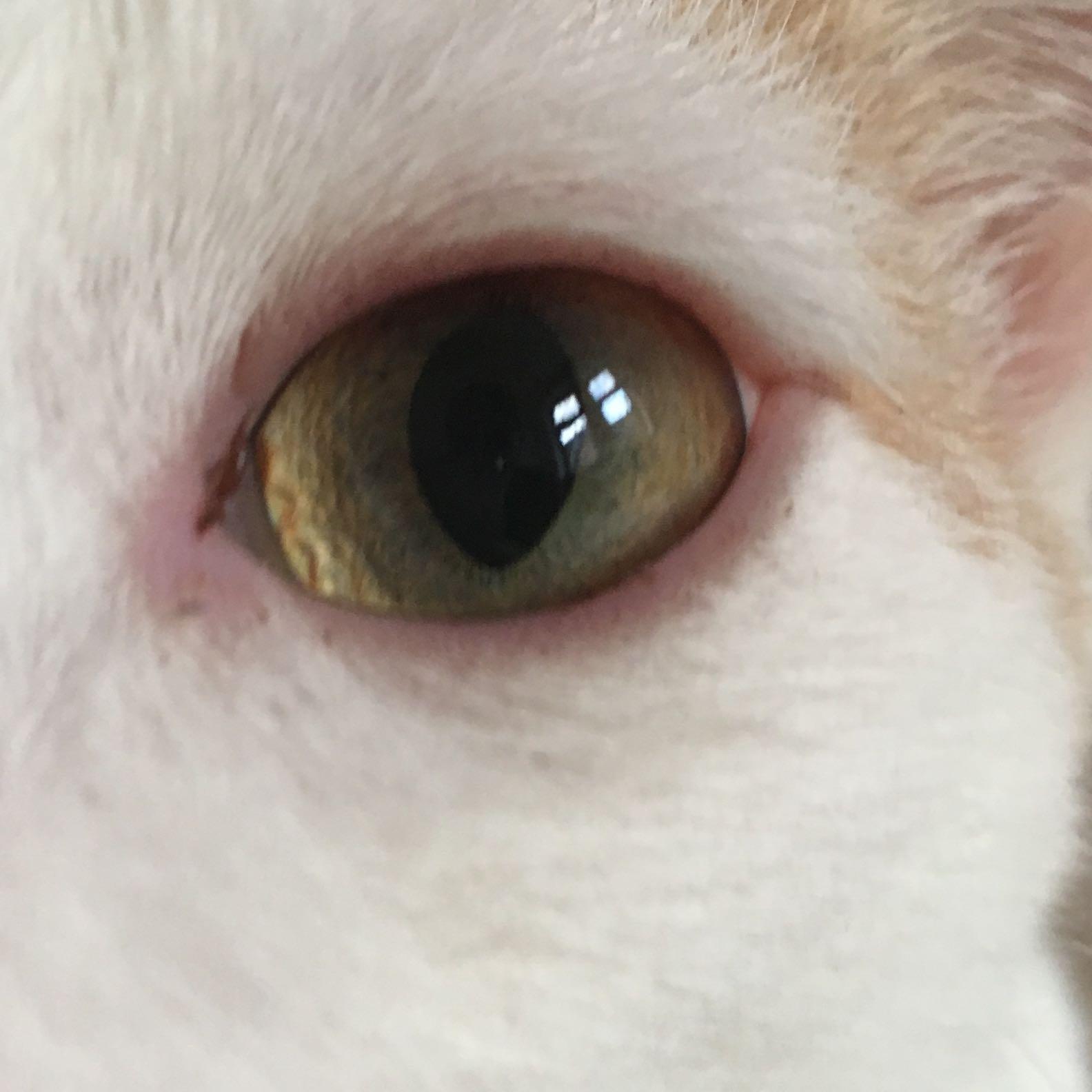 Rotes Auge Katze