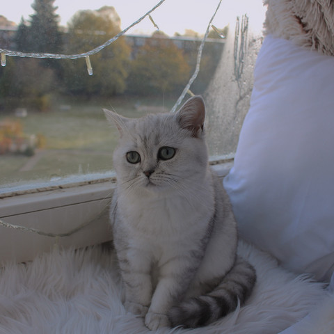 - (Katze, Kitten)