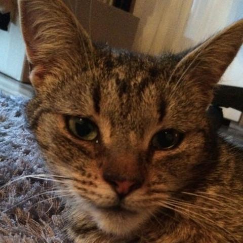Katze hat vergrößertes Kinn?