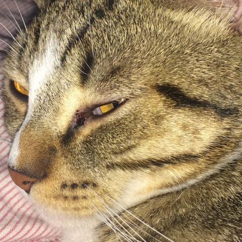 Wunde am linken Auge  - (Katze, Haustiere, Tierarzt)