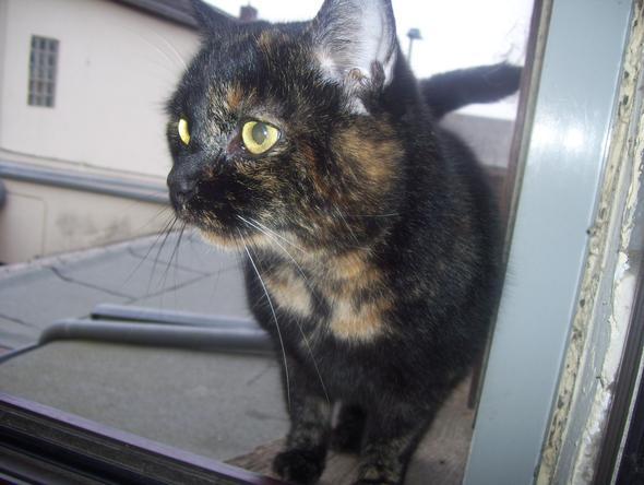 Fanny - (Katzen, Arbeitslosigkeit)