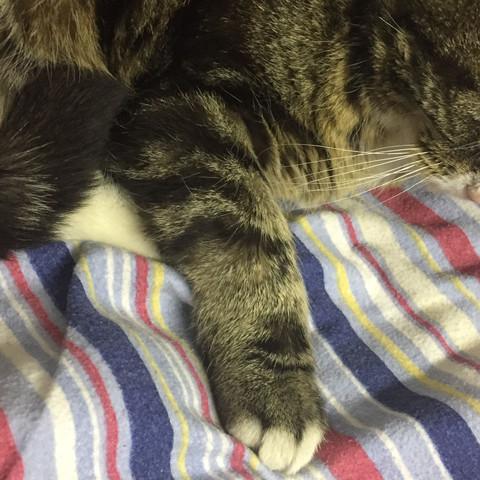 Katze humpelt und hat ein dickes arm?