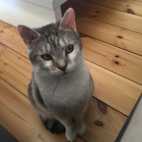 Meine Luna, 2 Jahre alt. - (Tiere, Hund, Katze)