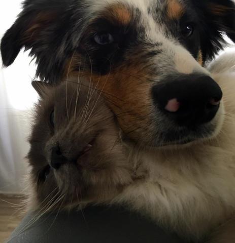 Tali der Hund und Gizmo die Katze - (Tiere, Hund, Haustiere)