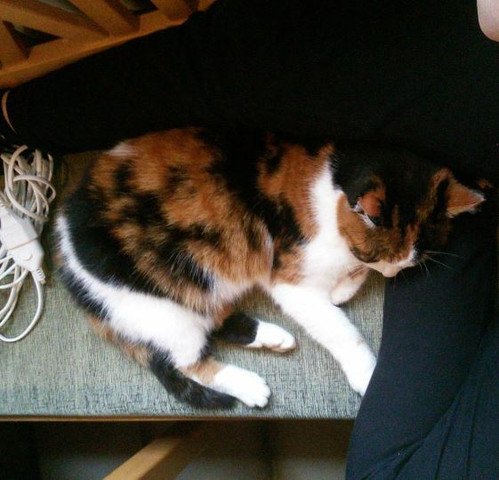 Cindy <3 - (Arzt, Katze, Kosten)