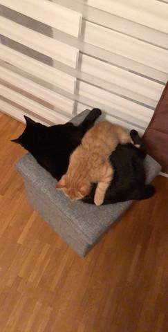 Katze knurrt beim kuscheln?