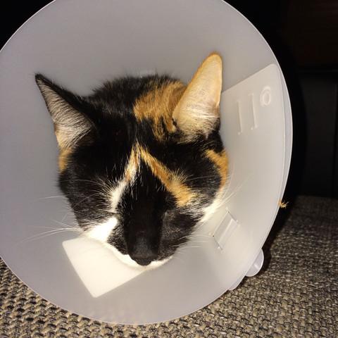 Katze Zittert Nach Kastration