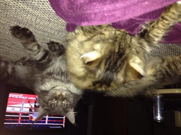 Katze soll nachts nicht mehr ins Schlafzimmer