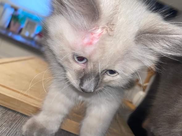 Katze verletzt?