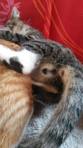 graue - (Tiere, Katze, Haustiere)