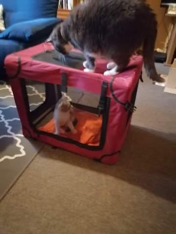 Katzen aneinander gewöhnen?