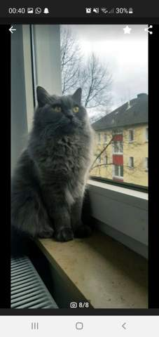 Katzen Augen?