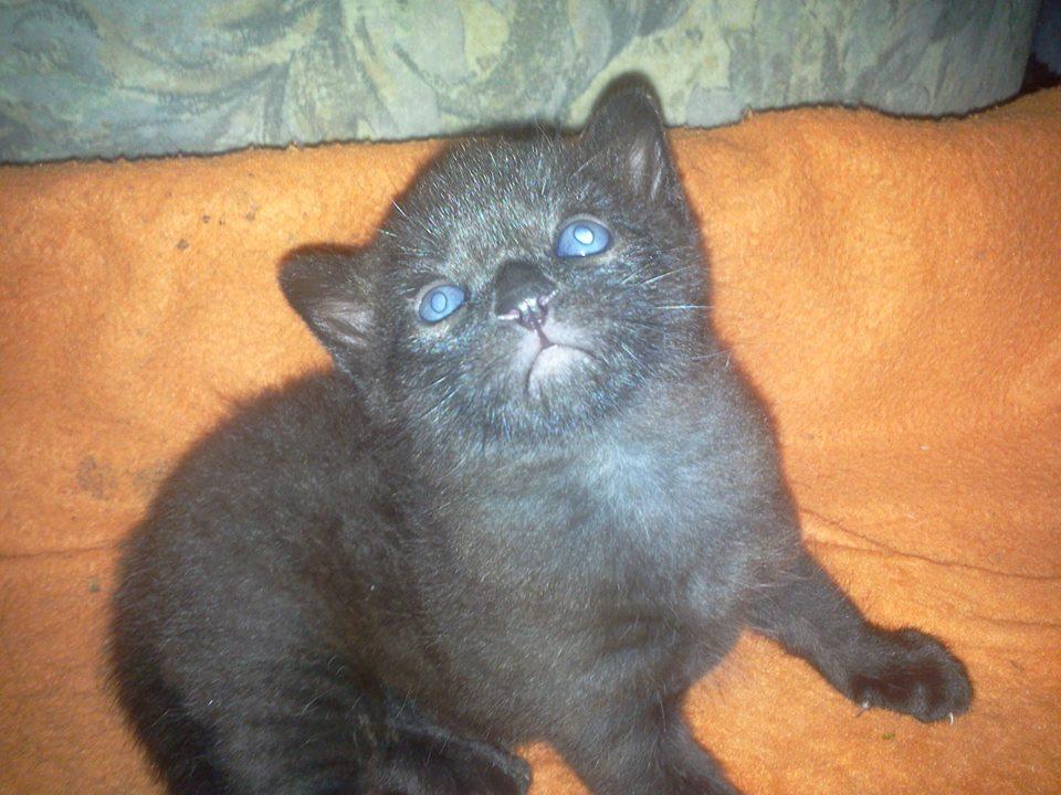 katzen baby 3 wochen alt hat fl he was kann man f r den kleinen nehmen tiere katze. Black Bedroom Furniture Sets. Home Design Ideas