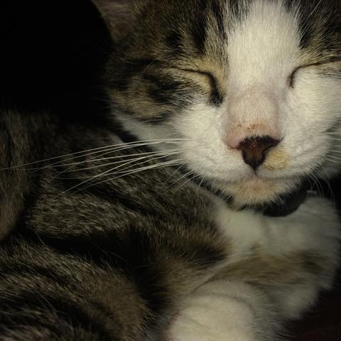 Nase wird immer brauner  - (Gesundheit, Katze, Tierarzt)