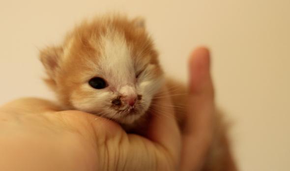 Dunkle Flecken und nur ein Auge offen - (Augen, Katze, Kitten)