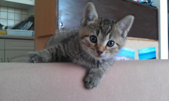 Casper,8 Wochen - (Katze, Katzen, Kater)