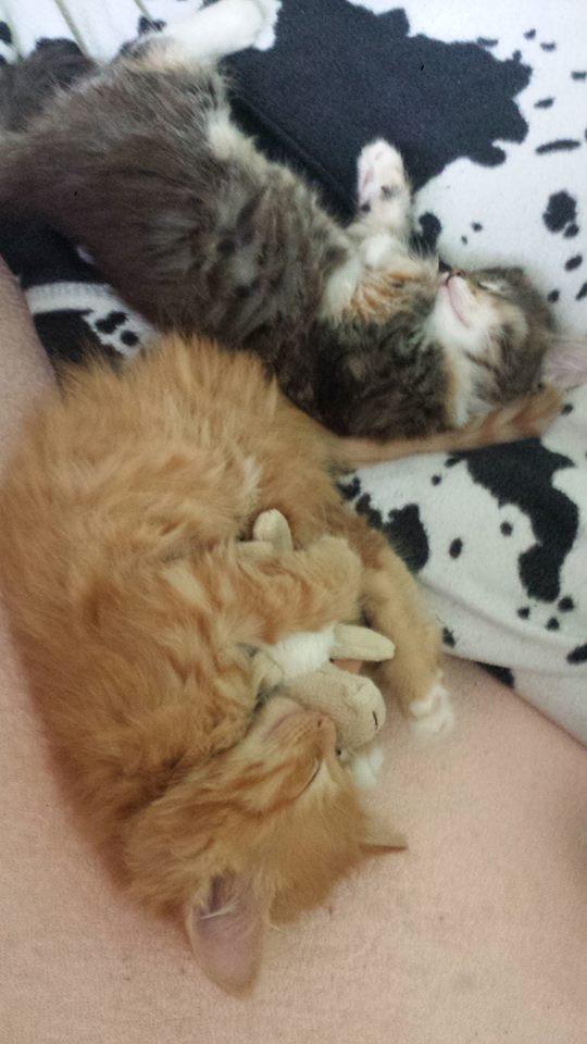 katzenbabys st rzen sich aufs fressen hilfe katzen katzenfutter babykatze. Black Bedroom Furniture Sets. Home Design Ideas