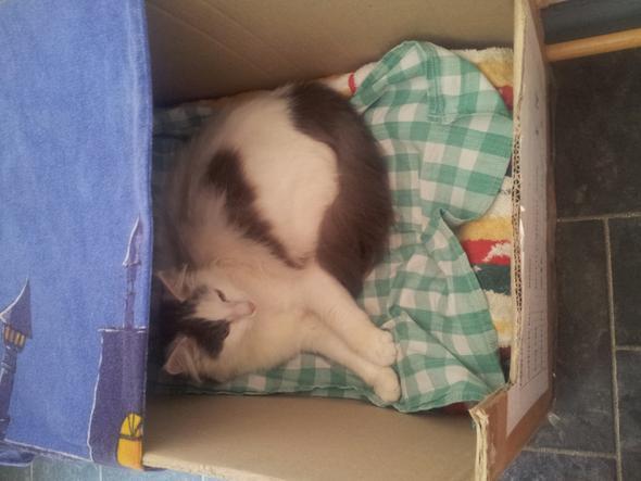 Amy - (Katze, Geburt, schleimpfropf)